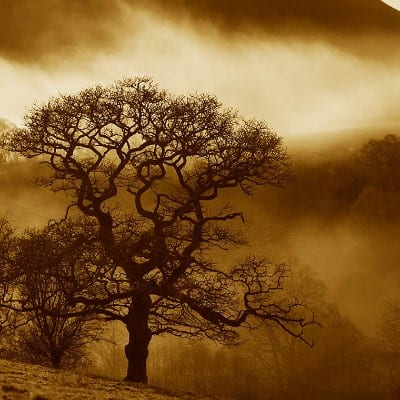 Smallwoods: Celebrating Oaks Photography Exhibition